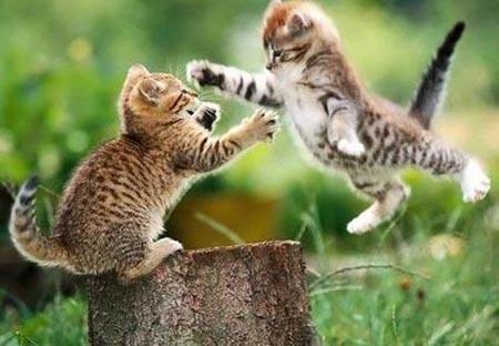 http://randazza.files.wordpress.com/2008/12/cat-fight-2.jpg